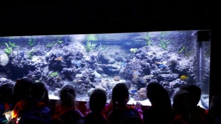 Wycieczka do Oceanarium