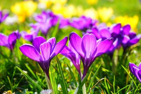 Wiosna radosna