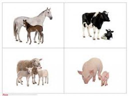 Bez zwierząt świat byłby smutny
