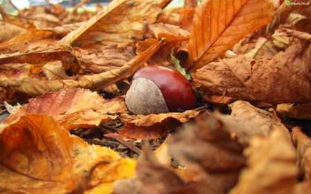 Szyszki, liście, kasztany...