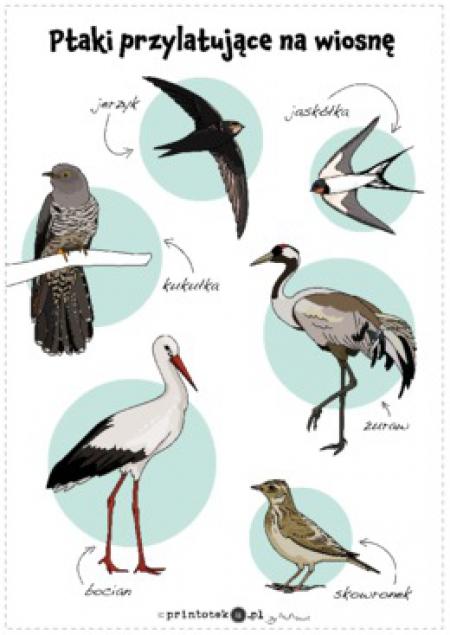 08.04.20201 Powroty ptaków