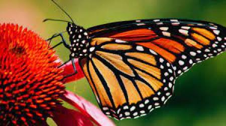 13.04.2021 Liczymy motyle