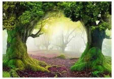 O czym szumią drzewa?